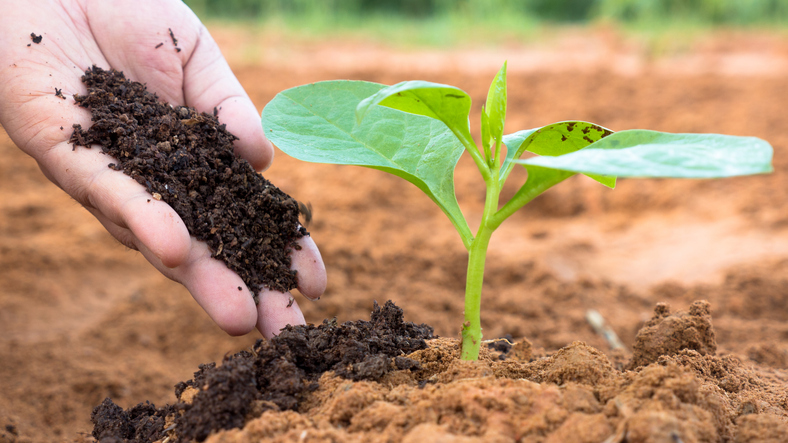 Jesenné hnojenie a nie len to …